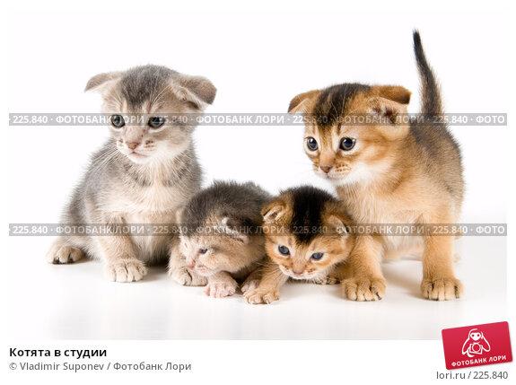 Купить «Котята в студии», фото № 225840, снято 11 декабря 2007 г. (c) Vladimir Suponev / Фотобанк Лори
