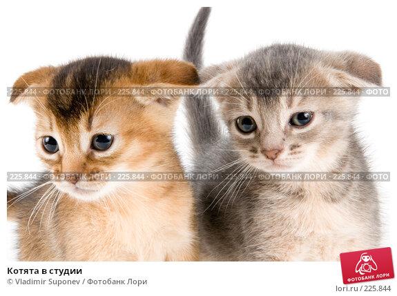 Котята в студии, фото № 225844, снято 11 декабря 2007 г. (c) Vladimir Suponev / Фотобанк Лори