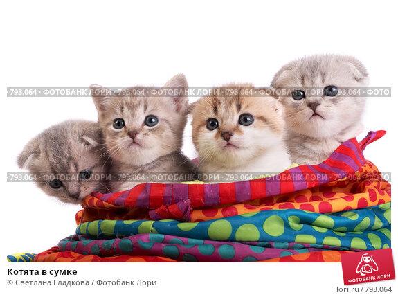 Купить «Котята в сумке», фото № 793064, снято 21 марта 2009 г. (c) Cветлана Гладкова / Фотобанк Лори