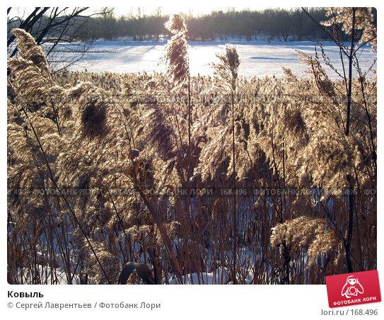 Ковыль, фото № 168496, снято 22 февраля 2003 г. (c) Сергей Лаврентьев / Фотобанк Лори