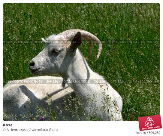 Купить «Коза», фото № 309280, снято 23 мая 2005 г. (c) A Челмодеев / Фотобанк Лори