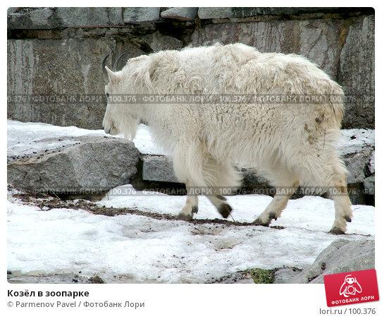 Козёл в зоопарке, фото № 100376, снято 9 марта 2007 г. (c) Parmenov Pavel / Фотобанк Лори