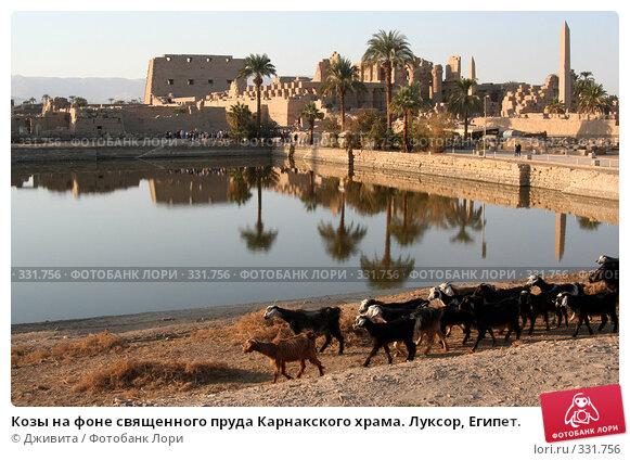 Козы на фоне священного пруда Карнакского храма. Луксор, Египет., фото № 331756, снято 11 января 2008 г. (c) Дживита / Фотобанк Лори