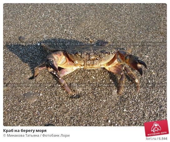 Краб на берегу моря, фото № 6844, снято 8 сентября 2005 г. (c) Минакова Татьяна / Фотобанк Лори