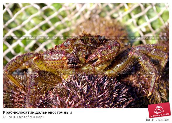 Краб-волосатик дальневосточный, фото № 304304, снято 30 мая 2008 г. (c) RedTC / Фотобанк Лори