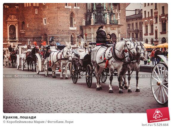 Краков, лошади. Редакционное фото, фотограф Коробейникова Мария / Фотобанк Лори
