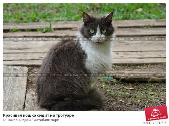 Красивая кошка сидит на тротуаре, фото № 191716, снято 29 мая 2006 г. (c) Шахов Андрей / Фотобанк Лори