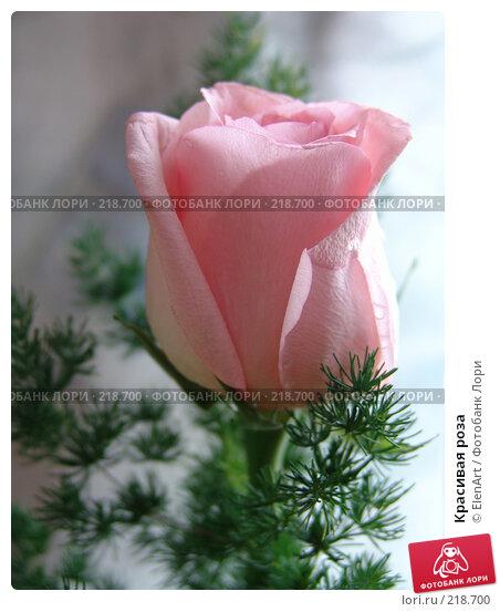 Красивая роза, фото № 218700, снято 23 июля 2017 г. (c) ElenArt / Фотобанк Лори