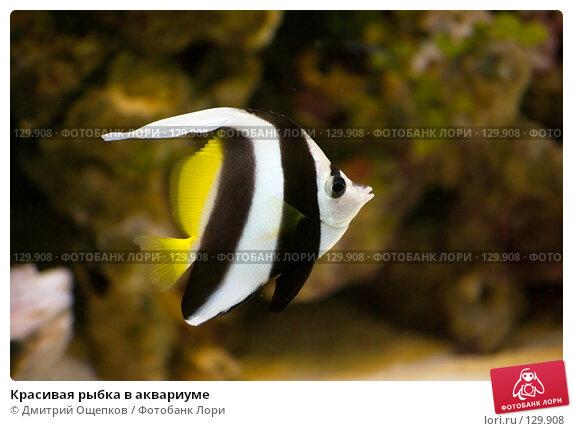 Красивая рыбка в аквариуме, фото № 129908, снято 22 апреля 2007 г. (c) Дмитрий Ощепков / Фотобанк Лори