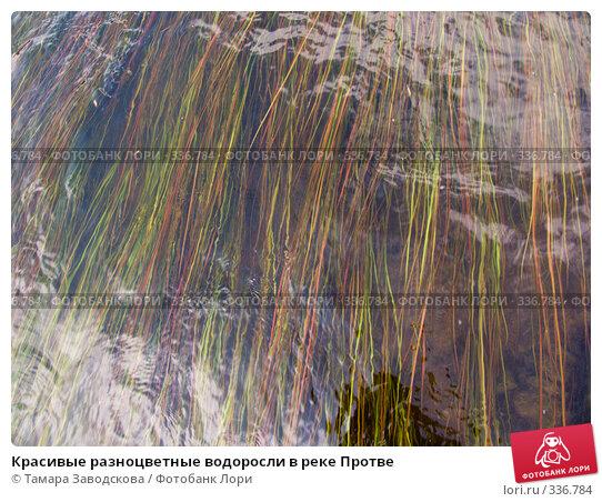 Красивые разноцветные водоросли в реке Протве, эксклюзивное фото № 336784, снято 14 июня 2008 г. (c) Тамара Заводскова / Фотобанк Лори