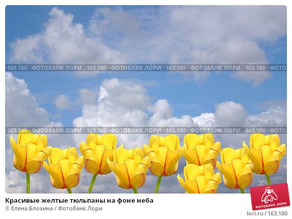 Красивые желтые тюльпаны на фоне неба, фото № 163180, снято 24 апреля 2007 г. (c) Елена Блохина / Фотобанк Лори