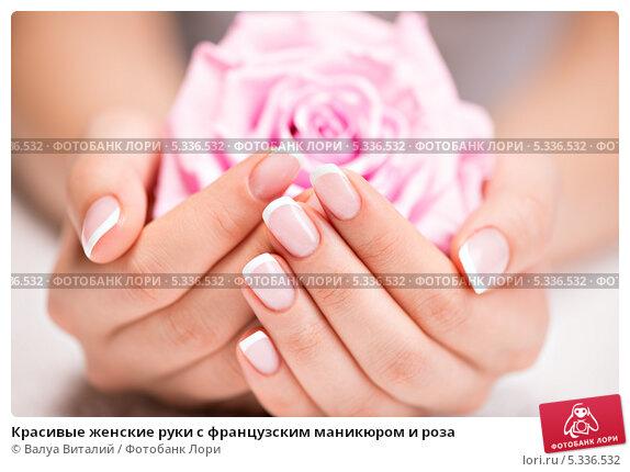 Купить «Красивые женские руки с французским маникюром и роза», фото № 5336532, снято 18 ноября 2013 г. (c) Валуа Виталий / Фотобанк Лори