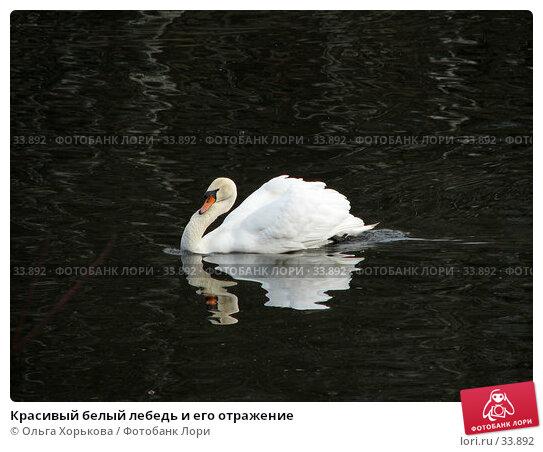 Красивый белый лебедь и его отражение, фото № 33892, снято 15 апреля 2007 г. (c) Ольга Хорькова / Фотобанк Лори
