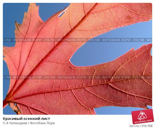Красивый осенний лист, фото № 310768, снято 12 октября 2006 г. (c) A Челмодеев / Фотобанк Лори