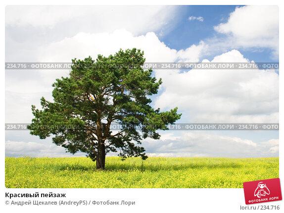 Купить «Красивый пейзаж», фото № 234716, снято 19 марта 2018 г. (c) Андрей Щекалев (AndreyPS) / Фотобанк Лори