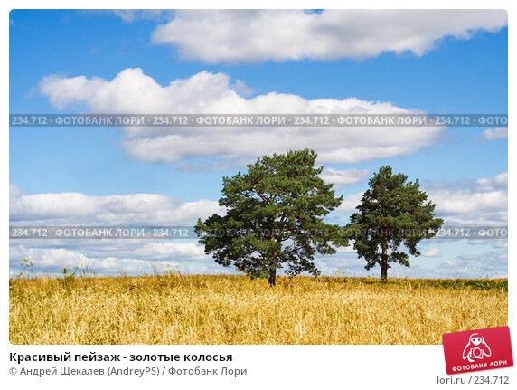 Красивый пейзаж - золотые колосья, фото № 234712, снято 26 апреля 2017 г. (c) Андрей Щекалев (AndreyPS) / Фотобанк Лори