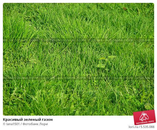 Купить «Красивый зеленый газон», эксклюзивное фото № 5535088, снято 12 мая 2013 г. (c) lana1501 / Фотобанк Лори