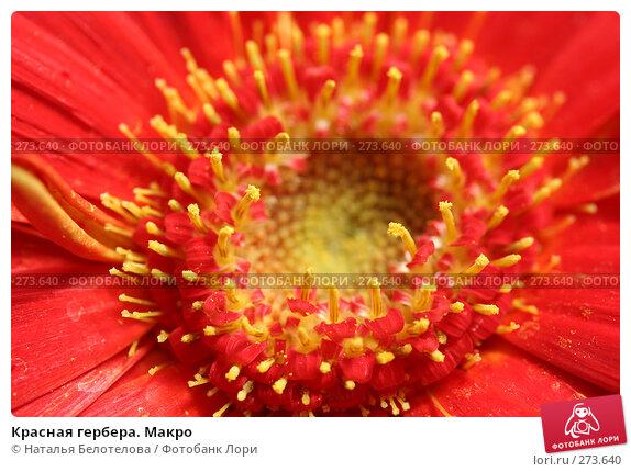Красная гербера. Макро, фото № 273640, снято 3 мая 2008 г. (c) Наталья Белотелова / Фотобанк Лори
