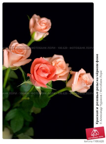Купить «Красная и  розовые розы на чёрном фоне», фото № 100620, снято 24 марта 2007 г. (c) Александр Чураков / Фотобанк Лори