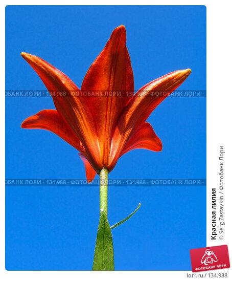 Красная лилия, фото № 134988, снято 14 июля 2005 г. (c) Serg Zastavkin / Фотобанк Лори