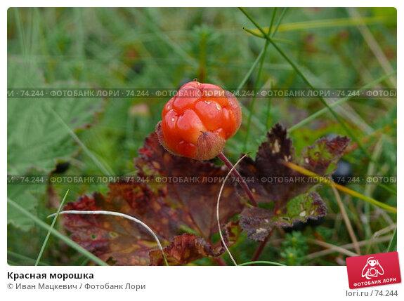 Красная морошка, фото № 74244, снято 9 августа 2007 г. (c) Иван Мацкевич / Фотобанк Лори