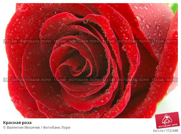 Красная роза, фото № 112648, снято 10 февраля 2007 г. (c) Валентин Мосичев / Фотобанк Лори