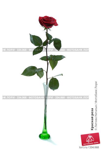 Красная роза, фото № 334068, снято 16 января 2008 г. (c) Литова Наталья / Фотобанк Лори