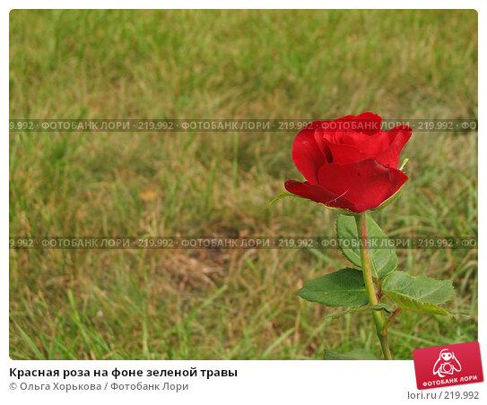 Красная роза на фоне зеленой травы, фото № 219992, снято 19 августа 2007 г. (c) Ольга Хорькова / Фотобанк Лори