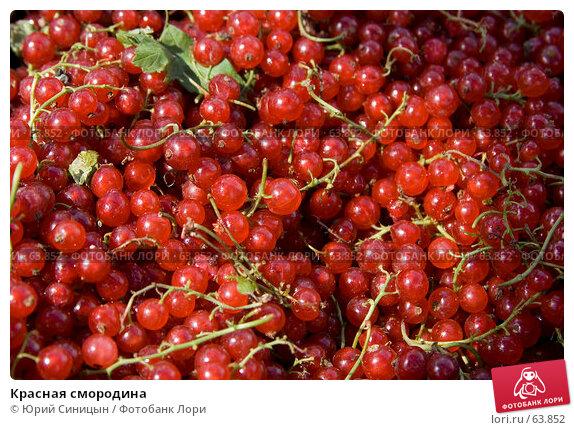Красная смородина, фото № 63852, снято 18 июля 2007 г. (c) Юрий Синицын / Фотобанк Лори