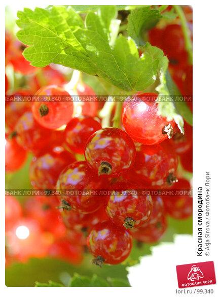 Красная смородина, фото № 99340, снято 21 июля 2007 г. (c) Asja Sirova / Фотобанк Лори
