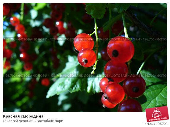 Купить «Красная смородина», фото № 126700, снято 8 июля 2007 г. (c) Сергей Девяткин / Фотобанк Лори