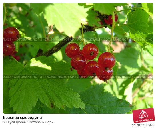 Красная смородина, фото № 278668, снято 3 августа 2004 г. (c) Olya&Tyoma / Фотобанк Лори