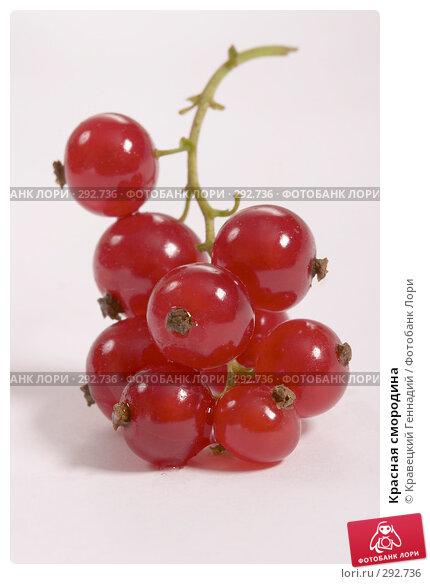Красная смородина, фото № 292736, снято 21 июля 2004 г. (c) Кравецкий Геннадий / Фотобанк Лори