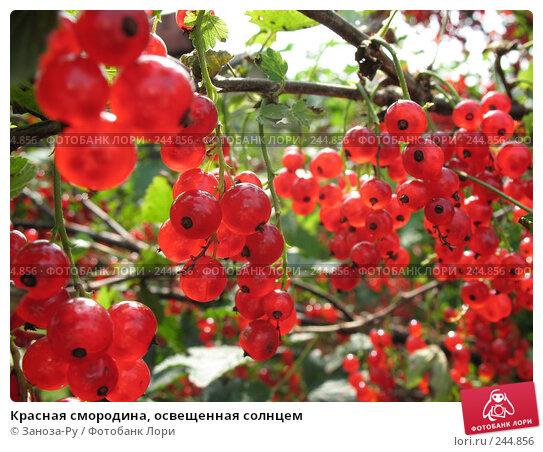 Купить «Красная смородина, освещенная солнцем», фото № 244856, снято 5 августа 2007 г. (c) Заноза-Ру / Фотобанк Лори