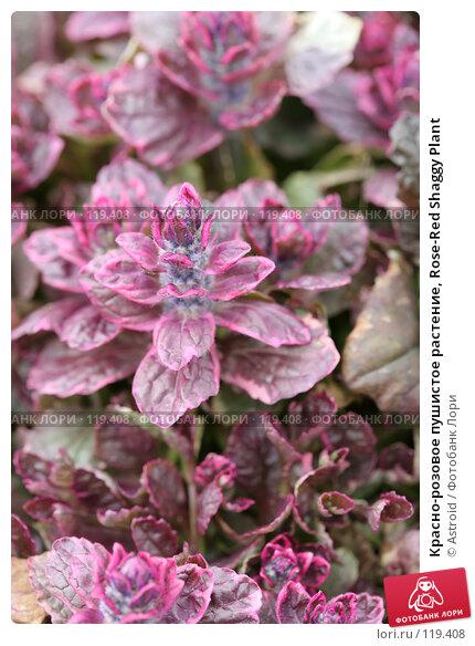 Красно-розовое пушистое растение, Rose-Red Shaggy Plant, фото № 119408, снято 8 мая 2007 г. (c) Astroid / Фотобанк Лори