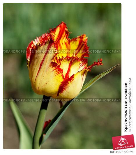 Красно-желтый тюльпан, фото № 135196, снято 8 июня 2006 г. (c) Serg Zastavkin / Фотобанк Лори