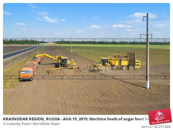 Купить «KRASNODAR REGION, RUSSIA - AUG 19, 2015: Machine loads of sugar beet into orange truck and harvester arrives, In 2015 in Krasnodar region have collected record grain harvest - 102 million tons of grain», фото № 28211424, снято 19 августа 2015 г. (c) Losevsky Pavel / Фотобанк Лори