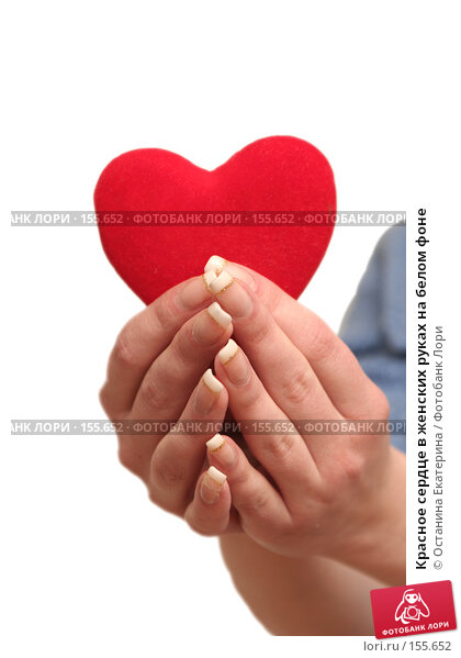 Красное сердце в женских руках на белом фоне, фото № 155652, снято 5 декабря 2007 г. (c) Останина Екатерина / Фотобанк Лори