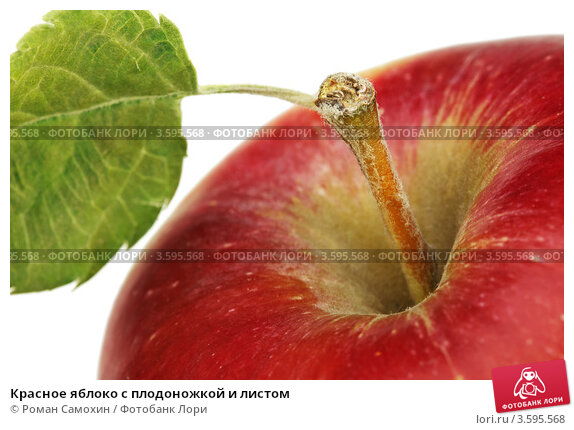Купить «Красное яблоко с плодоножкой и листом», фото № 3595568, снято 24 сентября 2011 г. (c) Роман Самохин / Фотобанк Лори