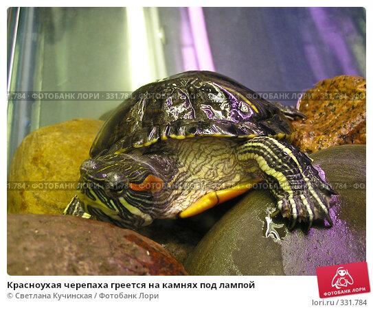 Красноухая черепаха греется на камнях под лампой, фото № 331784, снято 25 мая 2017 г. (c) Светлана Кучинская / Фотобанк Лори