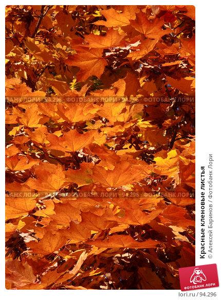 Красные кленовые листья, фото № 94296, снято 3 октября 2007 г. (c) Алексей Баринов / Фотобанк Лори