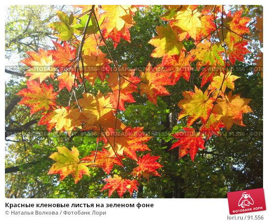 Красные кленовые листья на зеленом фоне, эксклюзивное фото № 91556, снято 2 октября 2007 г. (c) Наталья Волкова / Фотобанк Лори
