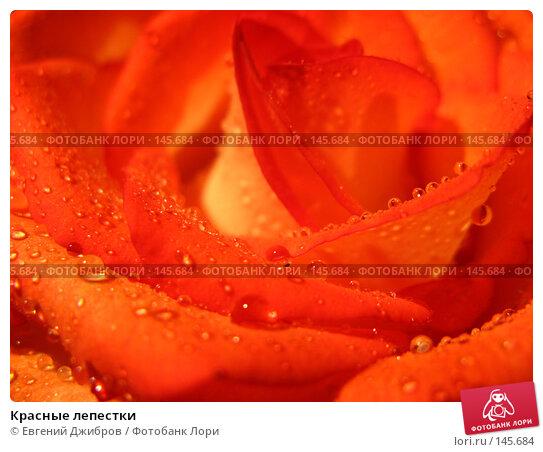 Красные лепестки, фото № 145684, снято 27 ноября 2007 г. (c) Лысых Константин / Фотобанк Лори