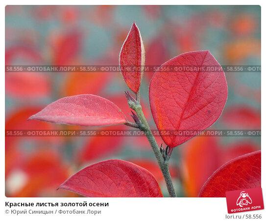 Красные листья золотой осени, фото № 58556, снято 22 октября 2004 г. (c) Юрий Синицын / Фотобанк Лори