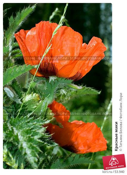 Красные маки, эксклюзивное фото № 53940, снято 28 мая 2007 г. (c) Татьяна Белова / Фотобанк Лори