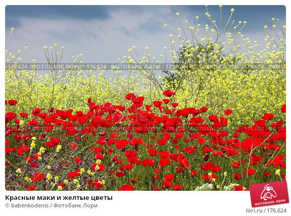 Красные маки и желтые цветы, фото № 176624, снято 2 мая 2006 г. (c) Бабенко Денис Юрьевич / Фотобанк Лори