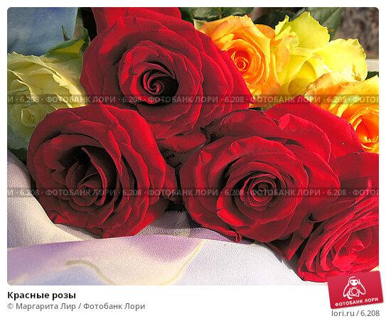 Красные розы, фото № 6208, снято 11 июня 2006 г. (c) Маргарита Лир / Фотобанк Лори