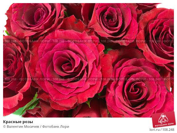 Красные розы, фото № 108248, снято 31 марта 2007 г. (c) Валентин Мосичев / Фотобанк Лори