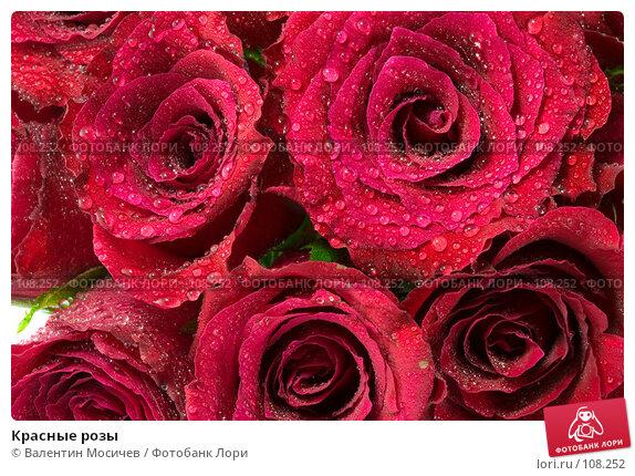 Красные розы, фото № 108252, снято 31 марта 2007 г. (c) Валентин Мосичев / Фотобанк Лори