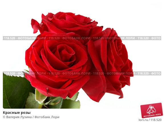 Красные розы, фото № 118520, снято 16 ноября 2007 г. (c) Валерия Потапова / Фотобанк Лори